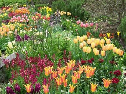 Upgrade цветочных клумб и палисадников Севастополя