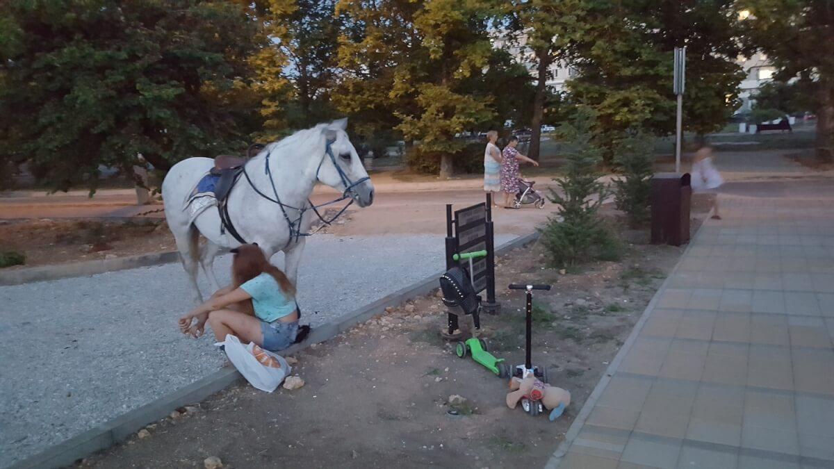 Несанкционированная торговля и конь в Динопарке
