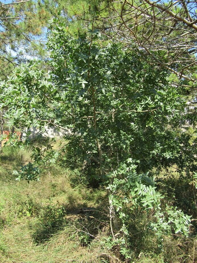 Спасем лес Фиолента